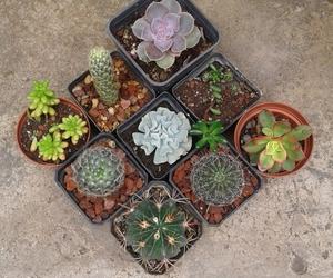 cactus and suculentas image
