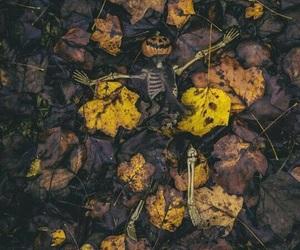 Halloween, pumpkin, and tumblr image