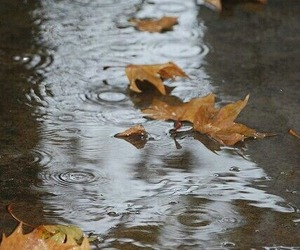 rain, autumn, and nature image