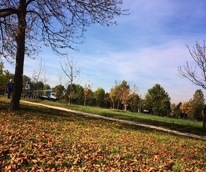 autumn, park, and relaxing image