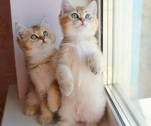 kitty, cat, and adorable image