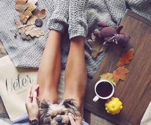 autumn, dog, and girl image