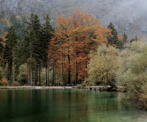 austria, fall, and forest image