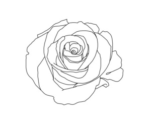 rose, white, and minimalism image