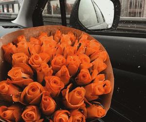 orange, rose, and flowers image