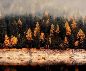autumn, trees, and yellow image