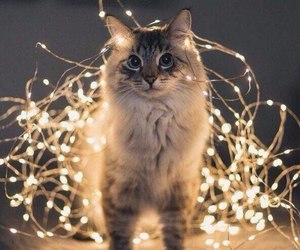 aesthetic, cat, and new year image