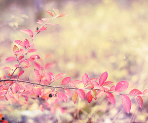 autumn, colorful, and delight image