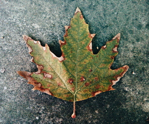 vsco, autumn, and leaves image