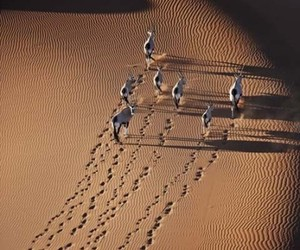 desert and sand image