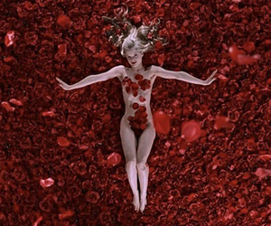 american beauty, rose, and film image