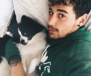 curly hair, cute, and puppy image
