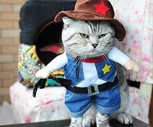 cat, clothes, and Halloween image