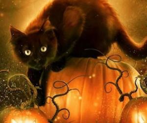 Halloween, pumpkinpatch, and cat image