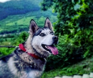 dogs, summer, and lovely image