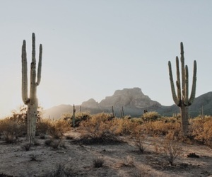 cactus, nature, and desert image