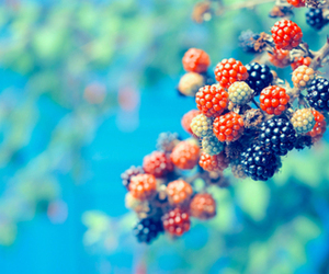 berries, blackberry, and blue image