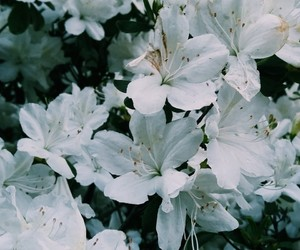 aesthetic, flowers, and gorgeous image