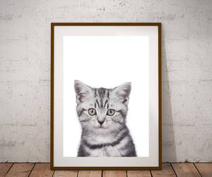 etsy, crazy cat lady, and cat poster image