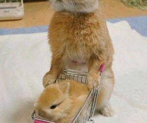 baby, rabbit, and bunny image