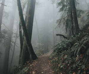 fog, forest, and magical image