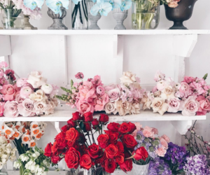 flowers, pretty, and instagram image