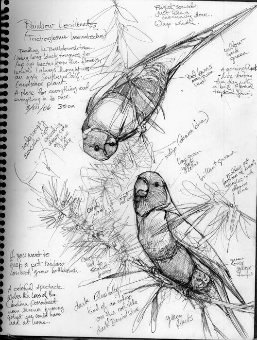 art, parrot, and pencil image