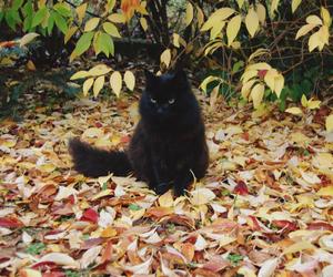 autumn, black, and cat image