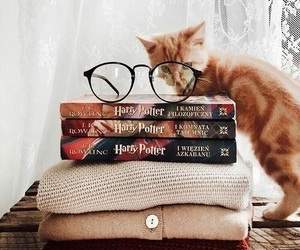 cat, book, and harry potter image