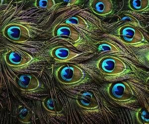 animal, colour, and digital image