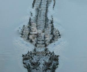 Animales, naturaleza, and cocodrilo image