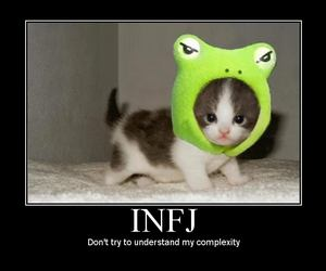 cat, personality, and infj image