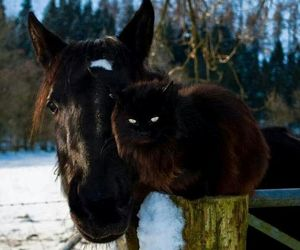 animal, cat, and horse image