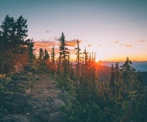 nature, photography, and forest image