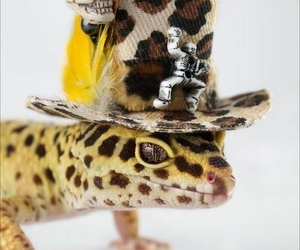 gecko, reptiles, and images image