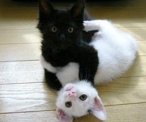 cat, kitten, and black image