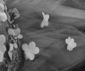 balck&white, delicate, and flowers image