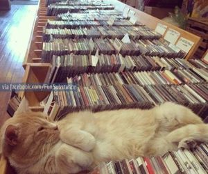 cat, music, and cd image
