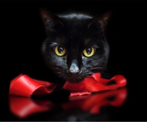 beautiful, red bow, and black image