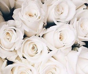 flowers, lifestyle, and roses image
