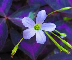 colors, flower, and flowers image