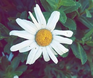 flowers, petals, and whiteflowers image