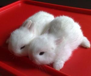 alternative, bunny, and animals image