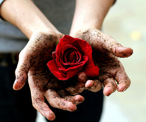 rose, hands, and flowers image