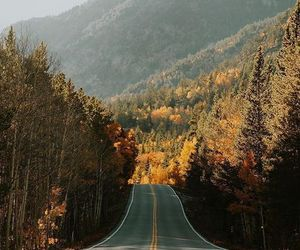 forest, road, and autumn image