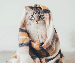 adorable, bed, and cat image