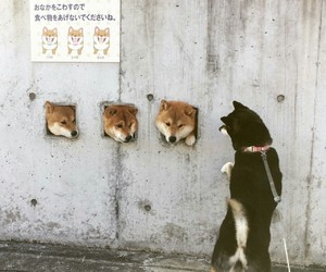 dogs, inu, and japan image