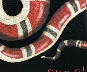 gucci, red, and snake image