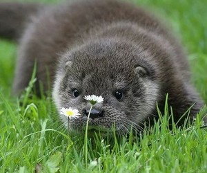 flowers, nature, and otter image