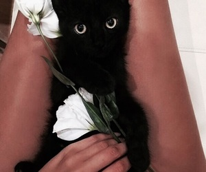 cat, black cat, and flowers image